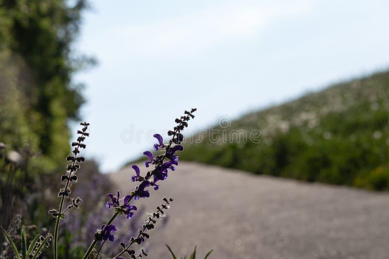 Blume am Frühjahr auf Straßenrand stockfoto