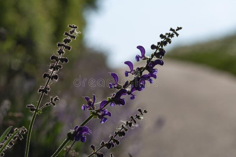 Blume am Frühjahr auf Straßenrand stockfotos