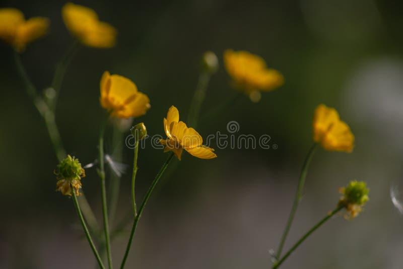 Blume am Frühjahr auf Straßenrand stockbild