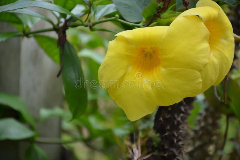 Blume gefunden in Thailand lizenzfreie stockfotografie
