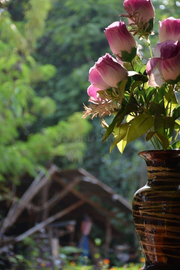 Blume gefunden in Thailand stockbilder