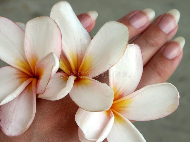 Blume-Hände lizenzfreie stockfotografie