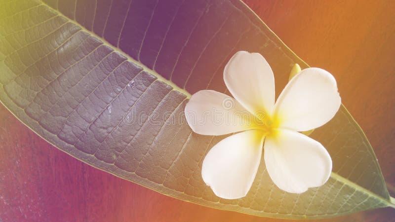 Blume im Badekurort stockbilder