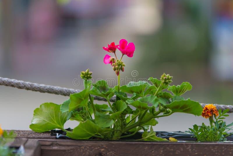 Blume im braunen hölzernen Topf stockfoto