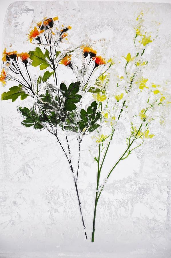 Blume im Eis stockfoto