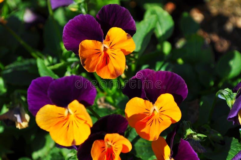 Blume im Garten lizenzfreie stockbilder