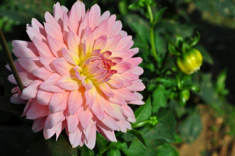 Blume im Garten stockbild