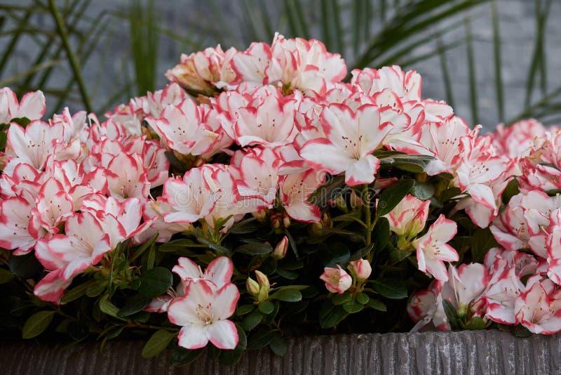 Download Blume im Garten stockbild. Bild von blumenblatt, frühling - 90232477