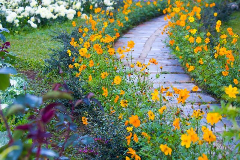 Blume im Garten mit Steingehweg stockfotos