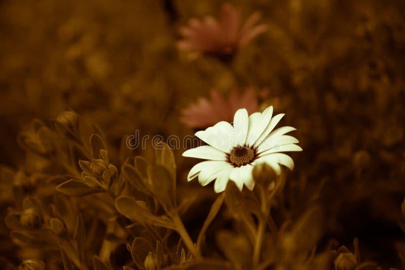 Blume im Garten Retro- lizenzfreie stockfotos