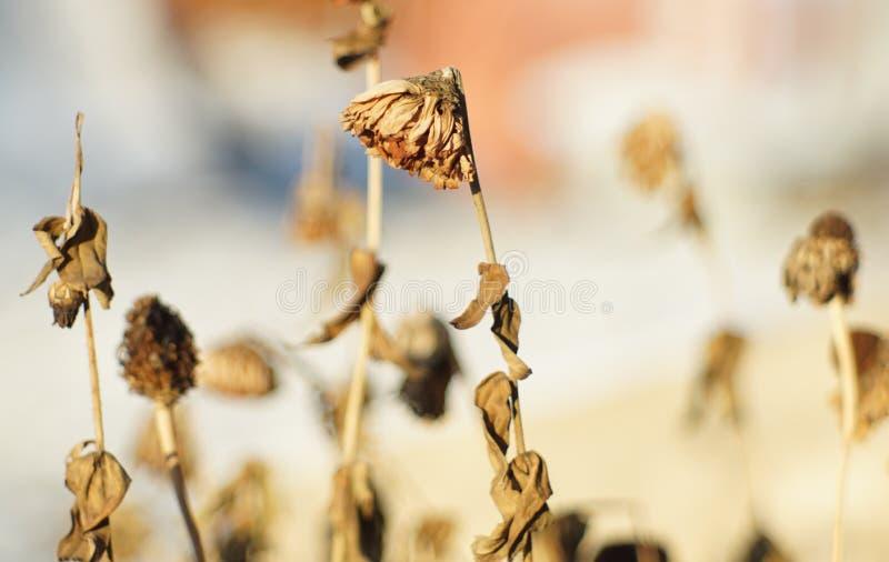 Blume im Haus stockfoto