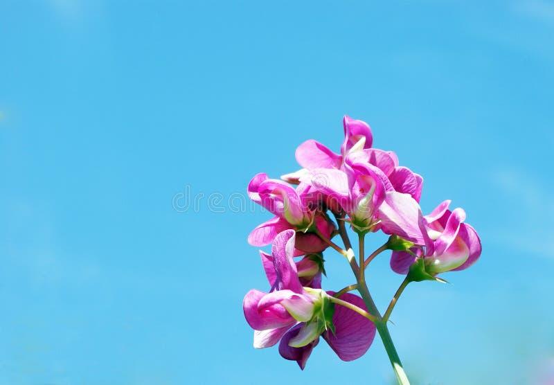 Blume im Himmel lizenzfreie stockbilder