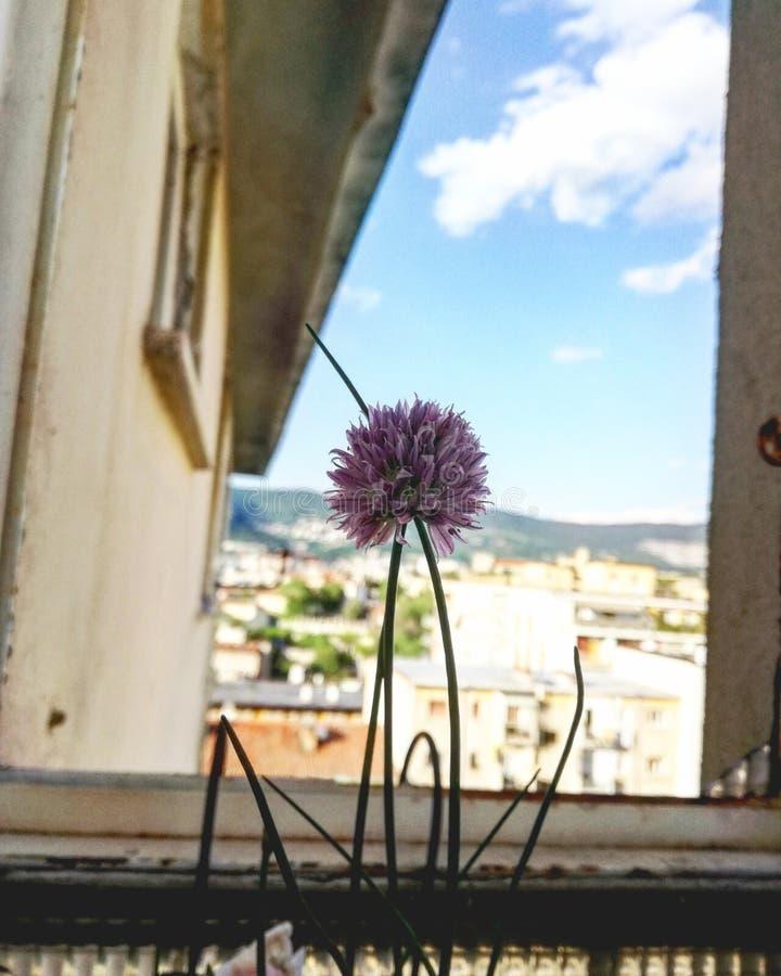 Blume im Paradies lizenzfreies stockfoto