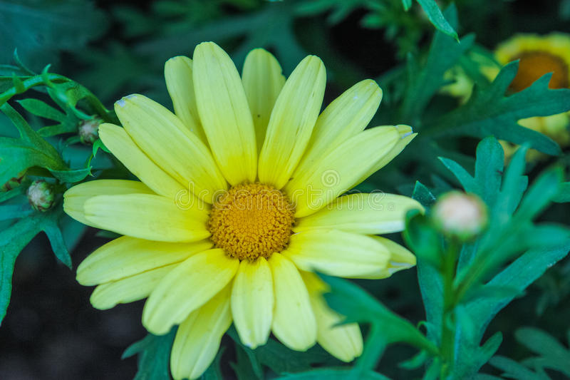 Blume im Park stockfotografie