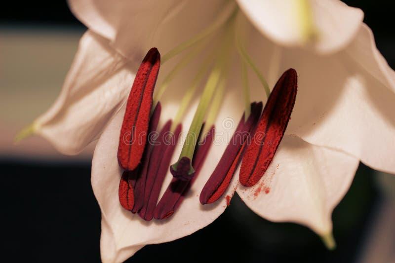 Blume im Sepia stockfotos