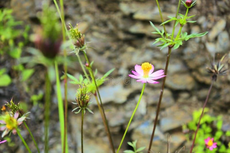 Blume im Straßenrand stockfotografie