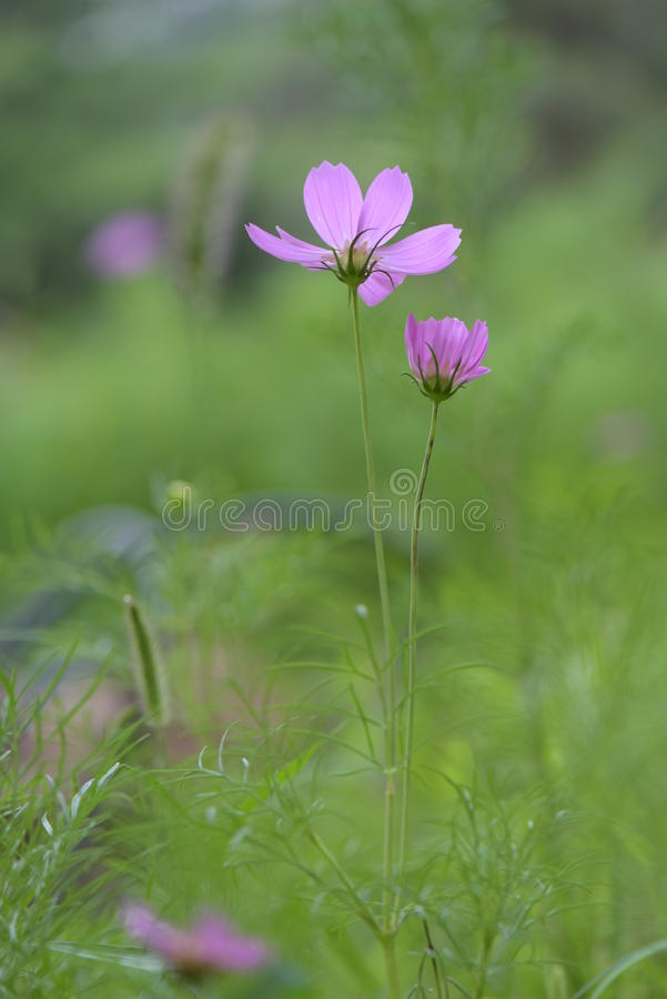 Blume im wilden stockfotos