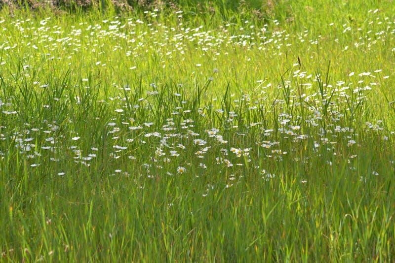 Blume im wilden mit Gras lizenzfreie stockbilder