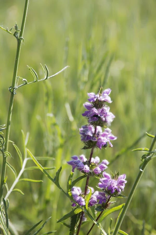 Blume im Wind, auf dem grünen Rasen lizenzfreie stockfotos