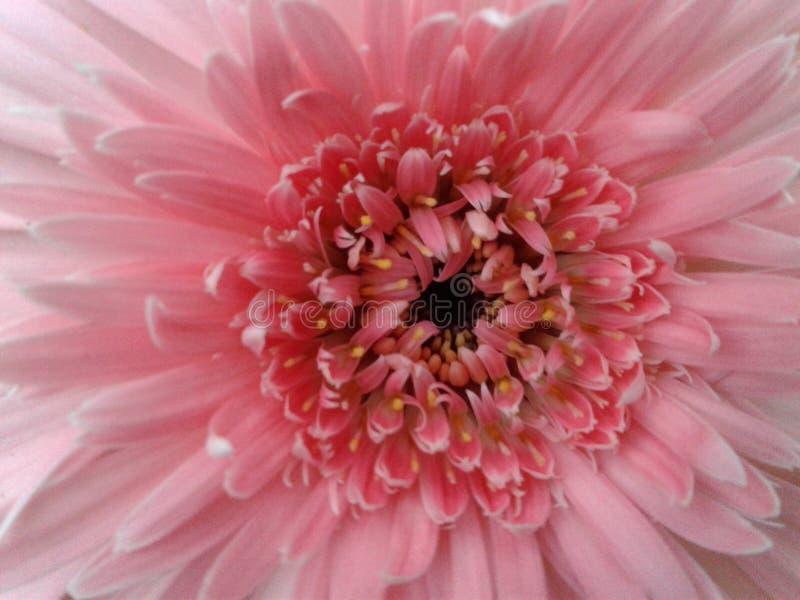Blume im Yard lizenzfreies stockbild