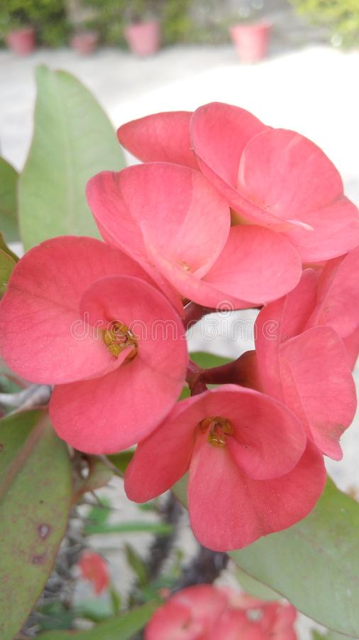 Blume in Indien stockfotografie