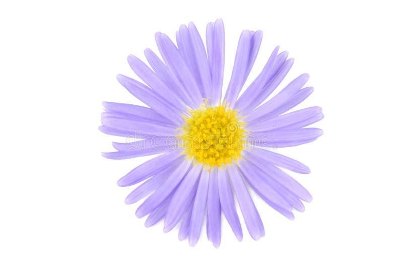 Blume isoalted auf Weiß lizenzfreie stockbilder