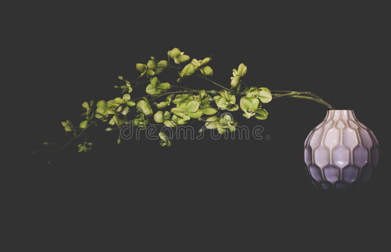 Blume ist noch stockfoto