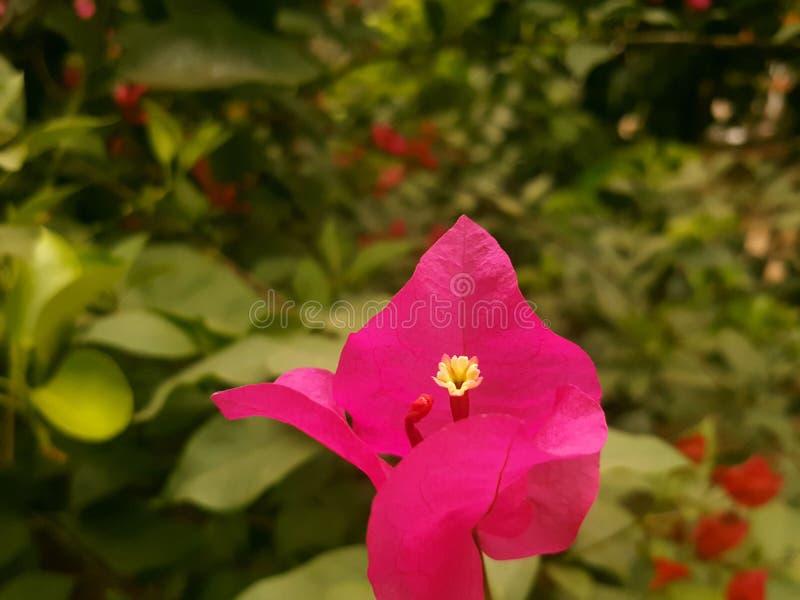 Blume in La Sierra stockfoto