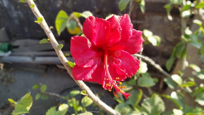 Blume Lilly stockfotografie