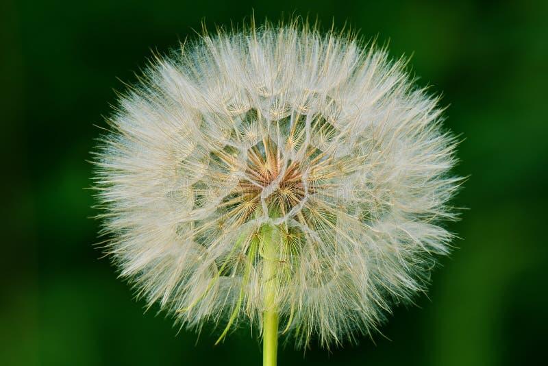 Blume lokalisiert auf einem grünen Hintergrund stockfotografie