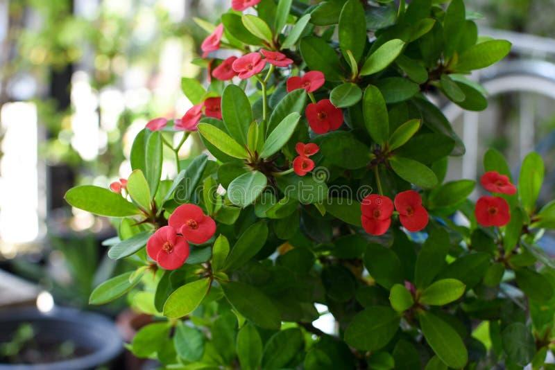 Blume mit acht Unsterblichen, mit acht Unsterblichen stockfoto