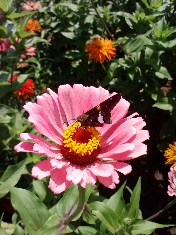 Blume mit Motte lizenzfreies stockfoto