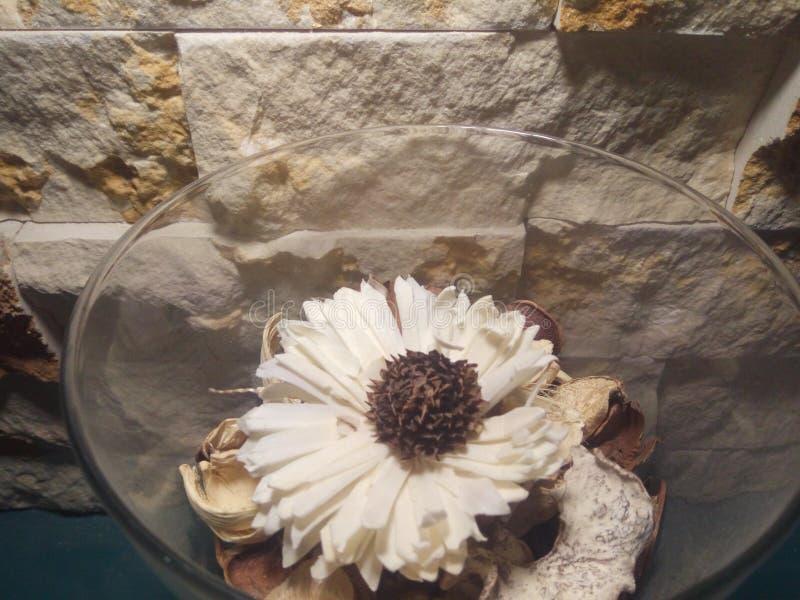 Blume mit Stein stockbild