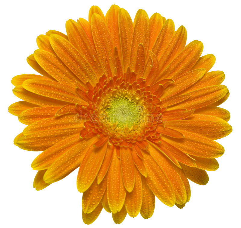 Blume mit Wassertröpfchen stockfotos