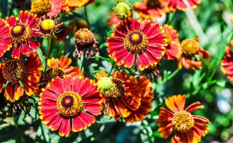 Blume nave Blumen sonnenblume betriebe stockfoto