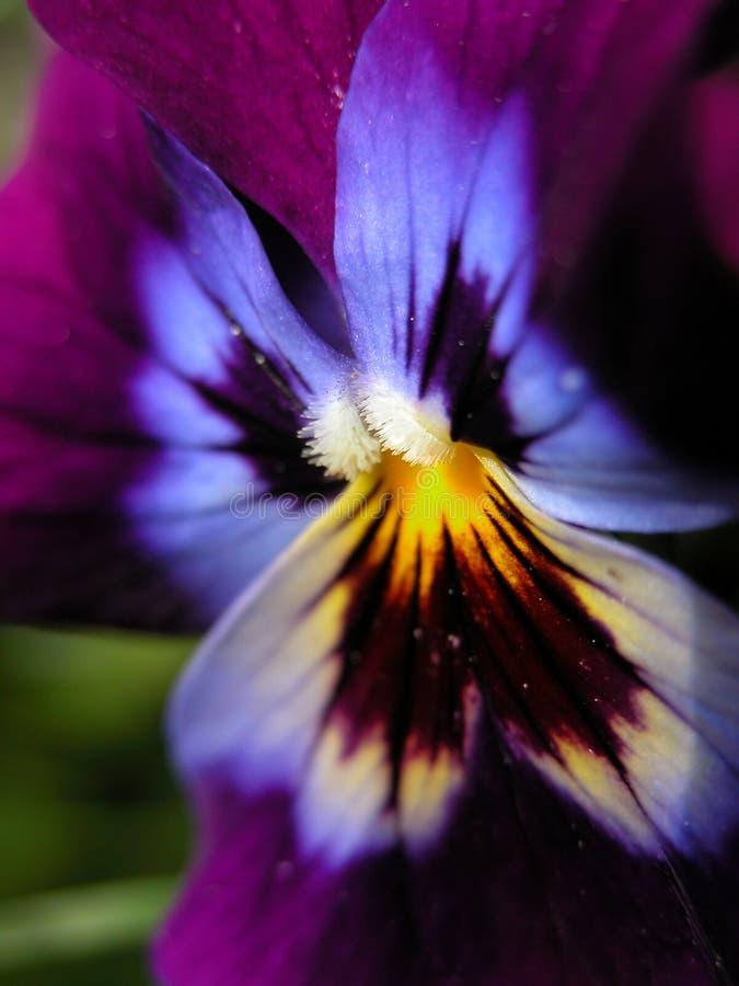 Blume oder Basisrecheneinheit? stockbild