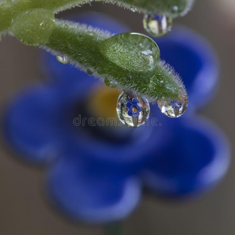 Blume reflektiert durch einen Tropfen lizenzfreies stockbild