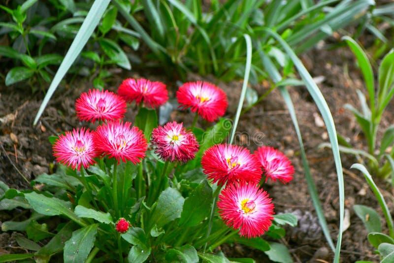Blume, Schönheit und Farbe des Rotes lizenzfreies stockbild
