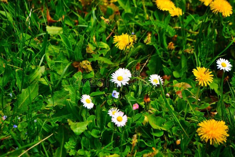 Blume, Schönheit und Farbe von dlue lizenzfreie stockfotografie