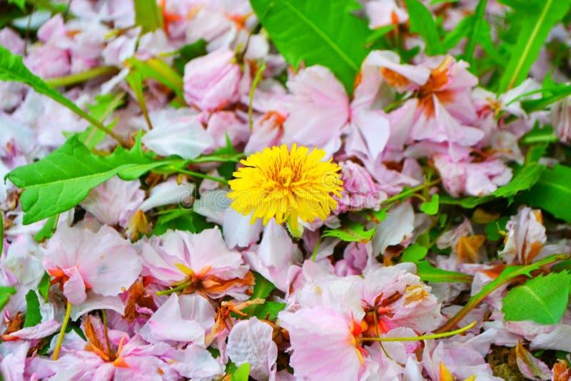 Blume, Schönheit und Farbe von elow lizenzfreies stockbild