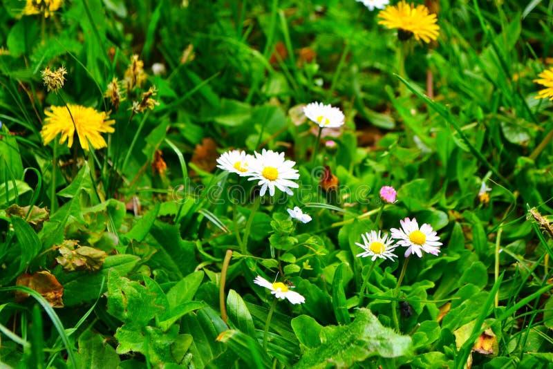 Blume, Schönheit und Geruch stockfotos