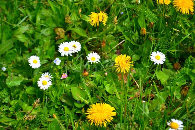 Blume, Schönheitsfarbe stockfoto