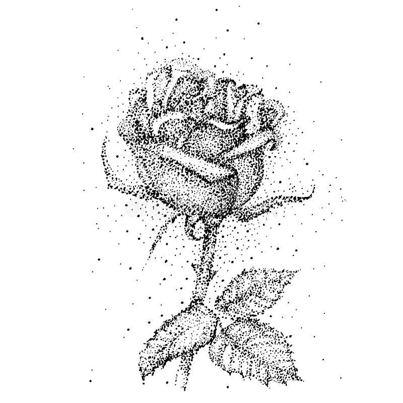 Blume stieg Isolat auf weißem Hintergrund Handgezogener rosafarbener Vektor, stock abbildung