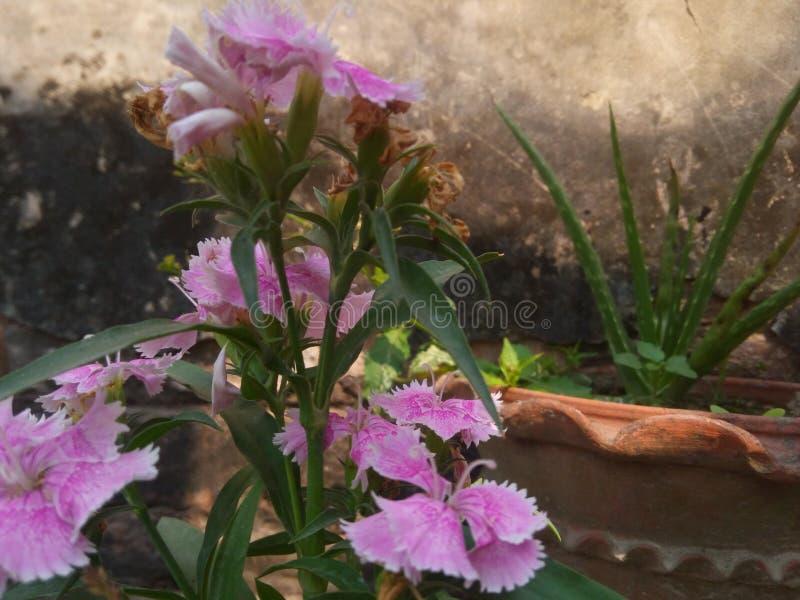 Blume und Alovera-Anlage stockfotos