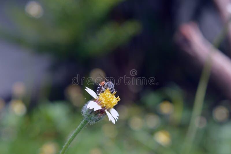 Blume und bee4 lizenzfreie stockfotografie