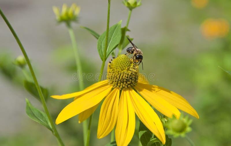 Blume und Biene lizenzfreie stockfotografie