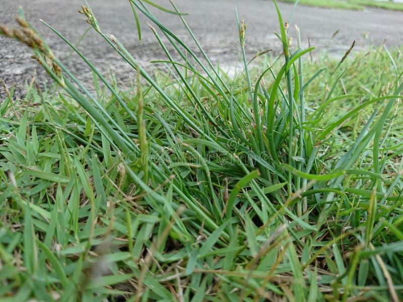 Blume und Gras lizenzfreies stockbild