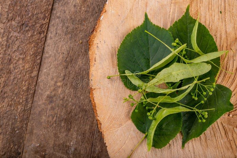 Blume und Samen des Limettenbaums auf einem hölzernen Stück Holz Material für geschmackvollen und gesunden Tee stockfotografie