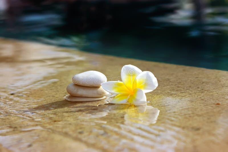 Blume und Steine im Hotelbadekurort lizenzfreies stockbild