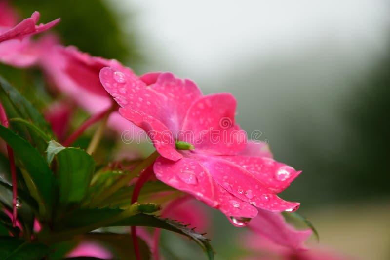 Blume und Tau stockbilder